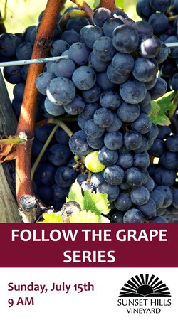 2018 Follow the Grape - Canopy Managment