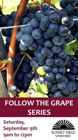 Follow the Grape - Harvest