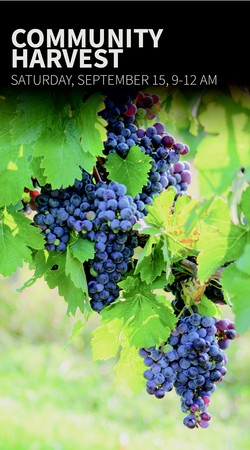 Follow the Grape - Community Harvest